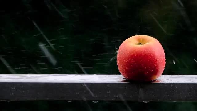 apple-45550