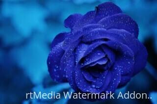 rose-blue-flower-rose-blooms-67636